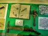 Muzeum_Rtyne_009