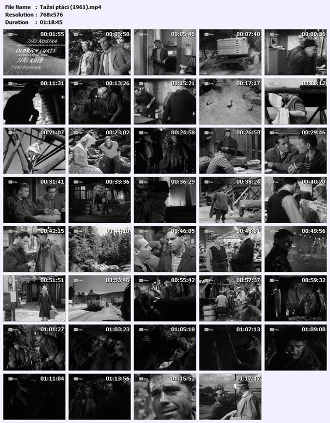 Tažní ptáci (1961)